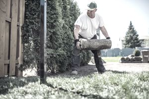 Man laying sod for new lawn in his yard
