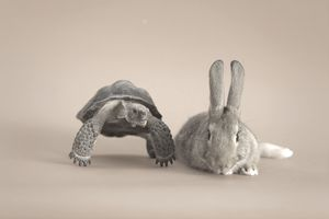 A tortoise and a hare, representing a wise investment strategy.