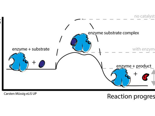enzymes action illustration