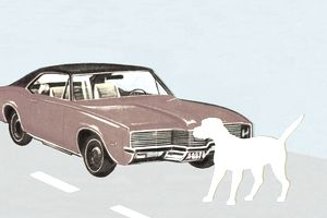 Car and Dog on Road