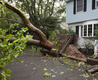 Fallen tree and home insurance coverage