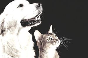 Close-Up Of Dog And Cat Looking Away Over Black Background