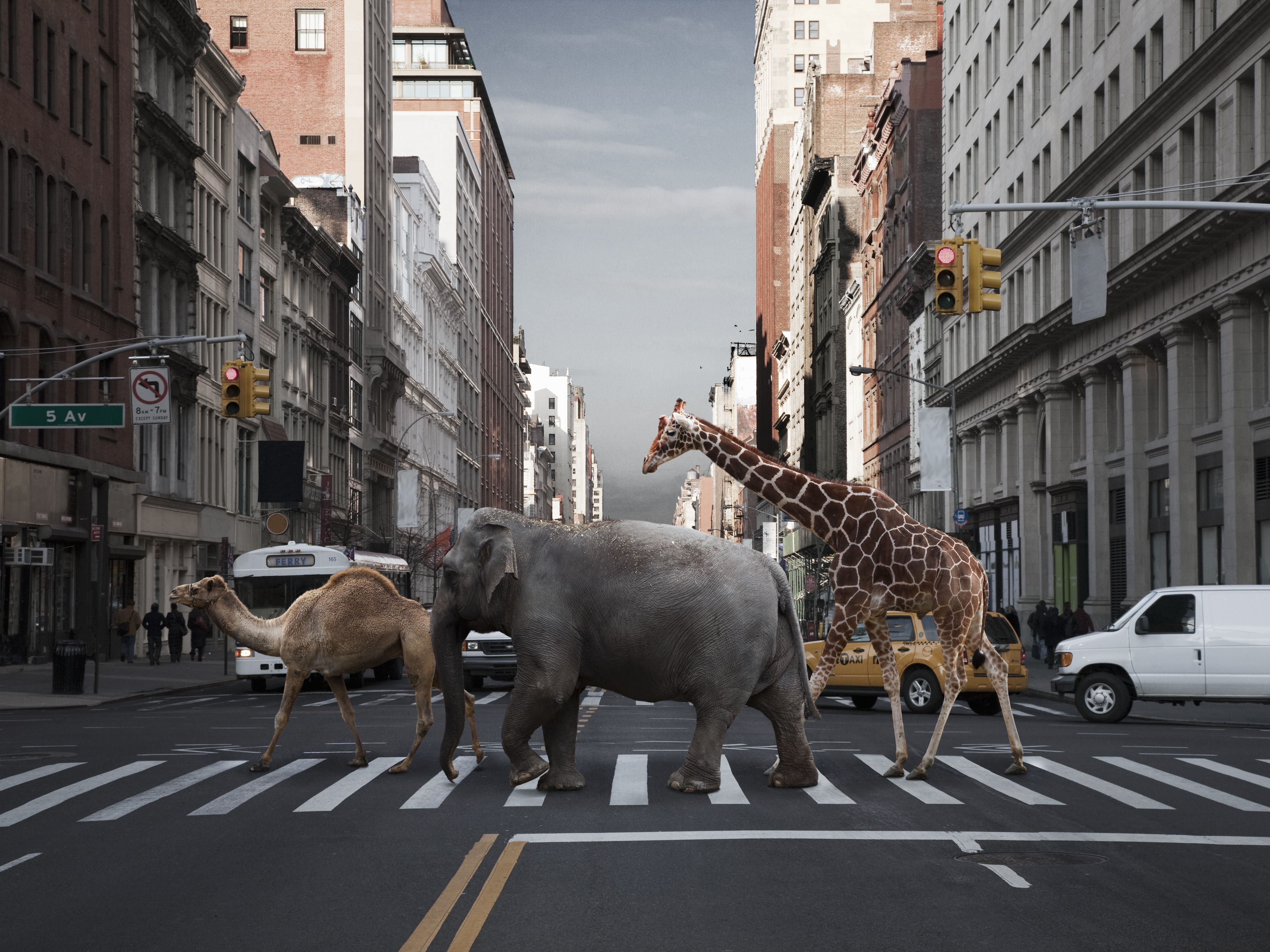 Tips for Car Accidents Caused by Animals