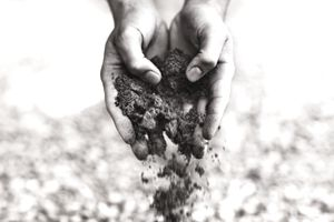 Person's hands full of dirt, letting some fall back to the ground.