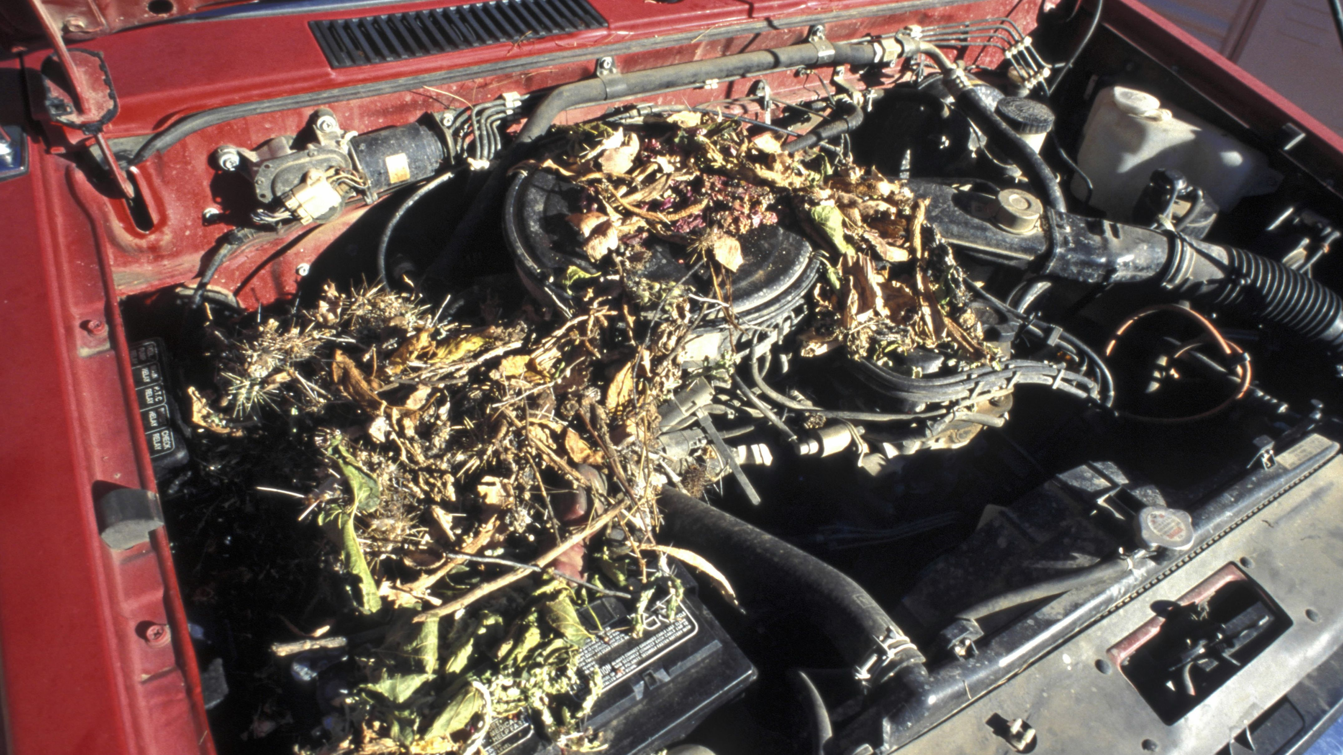 Is Rat Damage Covered By Car Insurance? Auto Wiring Harness Covering on wiring for 1977 ford f-250 engine compartment, house wiring covering, vinyl carpet covering, vinyl window covering,