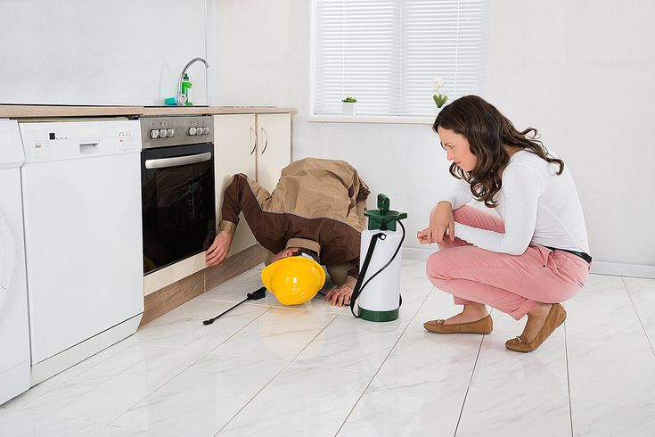 Image result for pest inspection for home