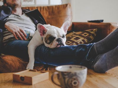 Man spending a lazy afternoon with his French Bulldog