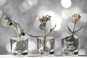 It plants with a flower and as fertilizer for his growth you coin of bank, illuminated by the light of the Sun.