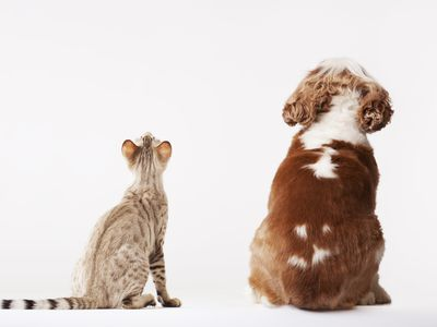 Cat and dog looking up to their pet parent, wondering if they are covered by pet insurance