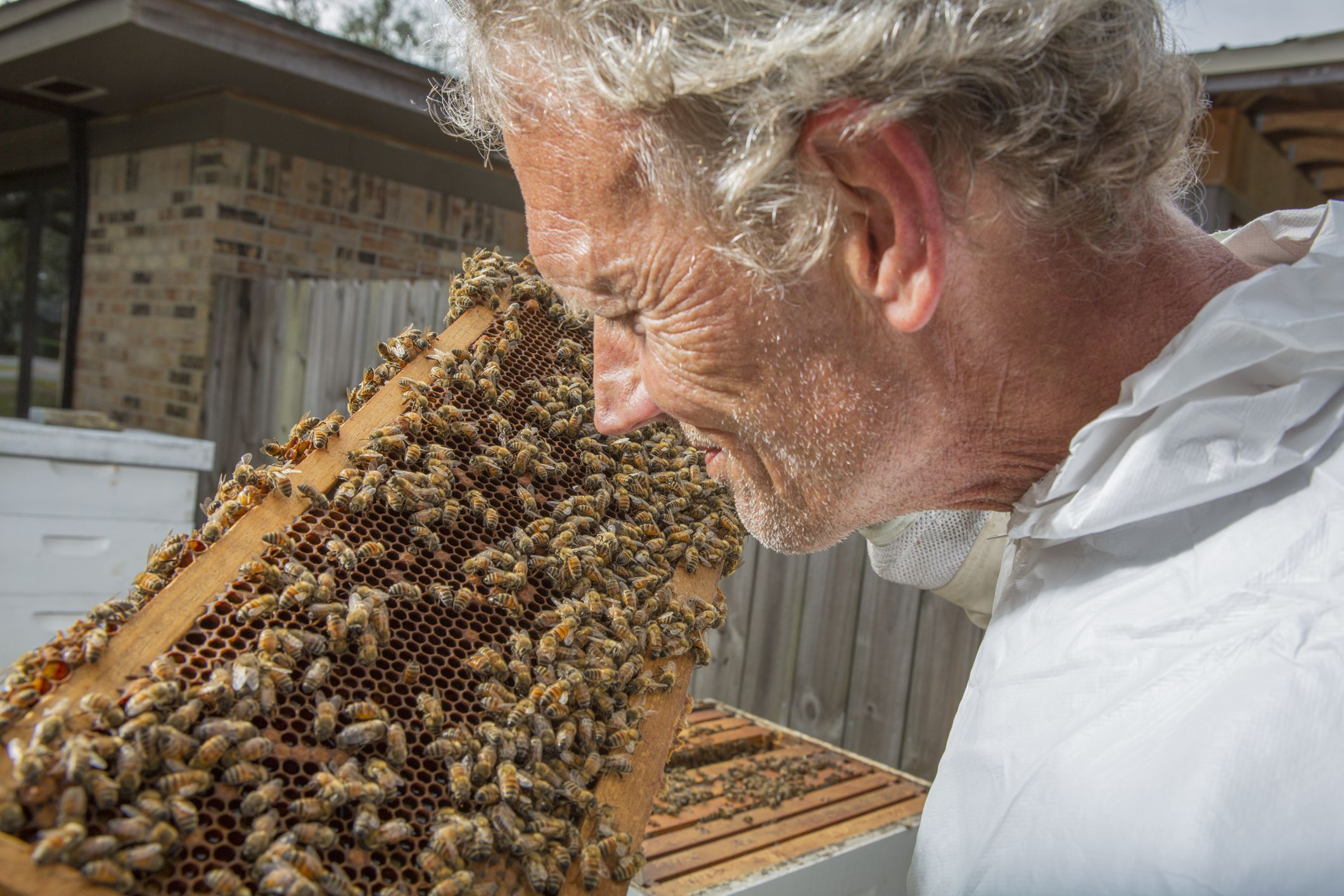 Bee Colony Collapse Disorder: Facts and Economic Impact