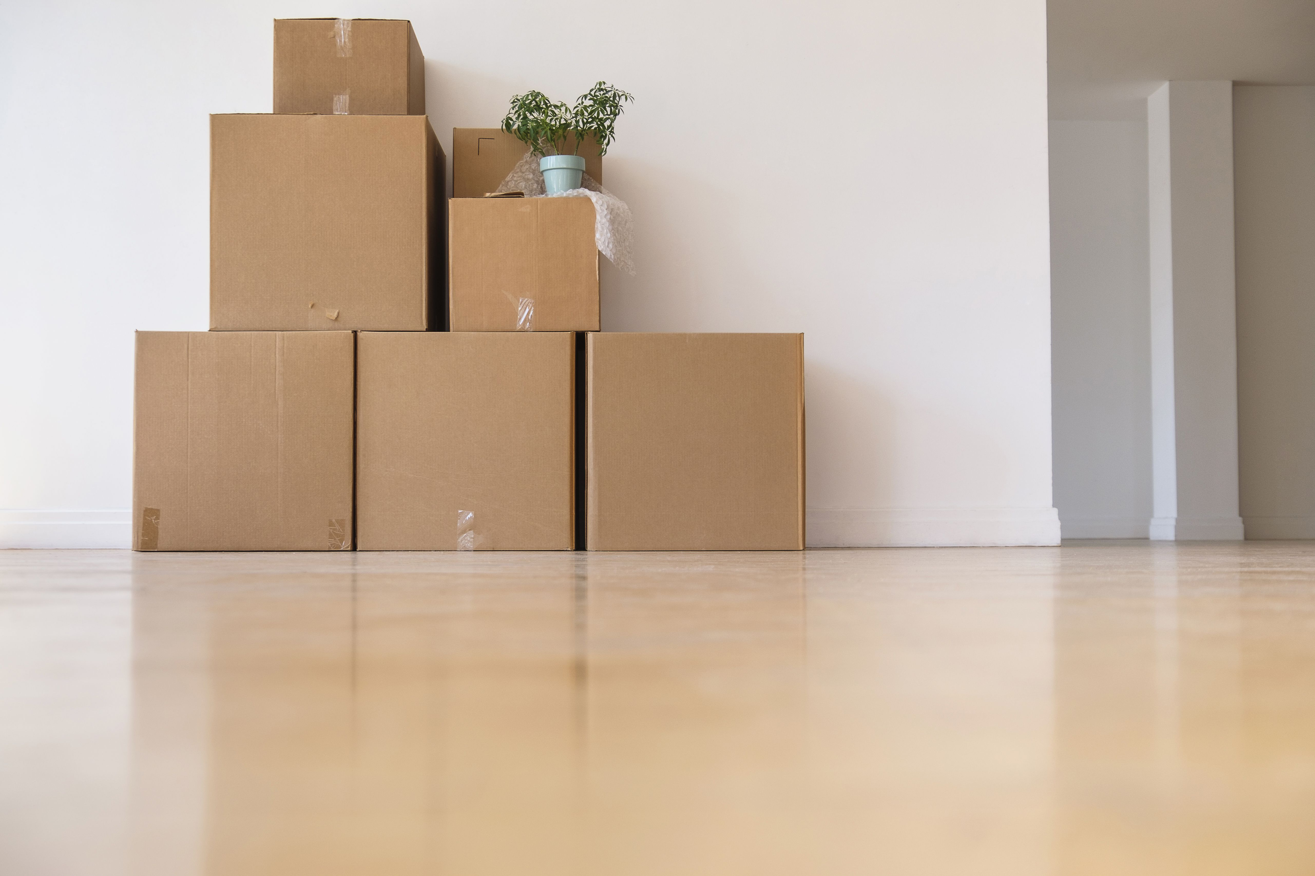A stack of moving boxes and a plant in an empty room of a home ready for a move