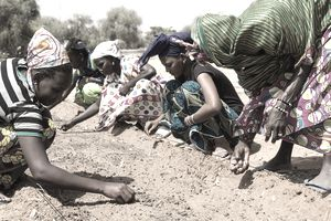 African women working in agriculture