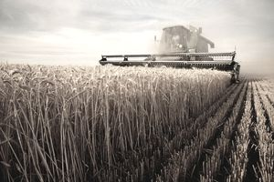 machine harvesting wheat
