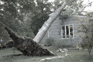 Large tree uprooted and leaning on roof of a house after a tornado hit