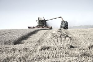 Farmer harvesting wheat