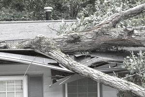 Large fallen tree on top of roof it cracked in storm