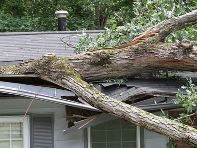 Large fallen tree on top of roof it cracked in storm.