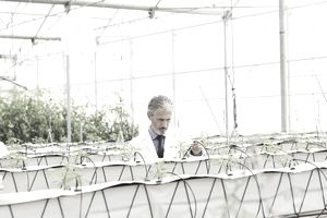 botanist examining plants in greenhouse