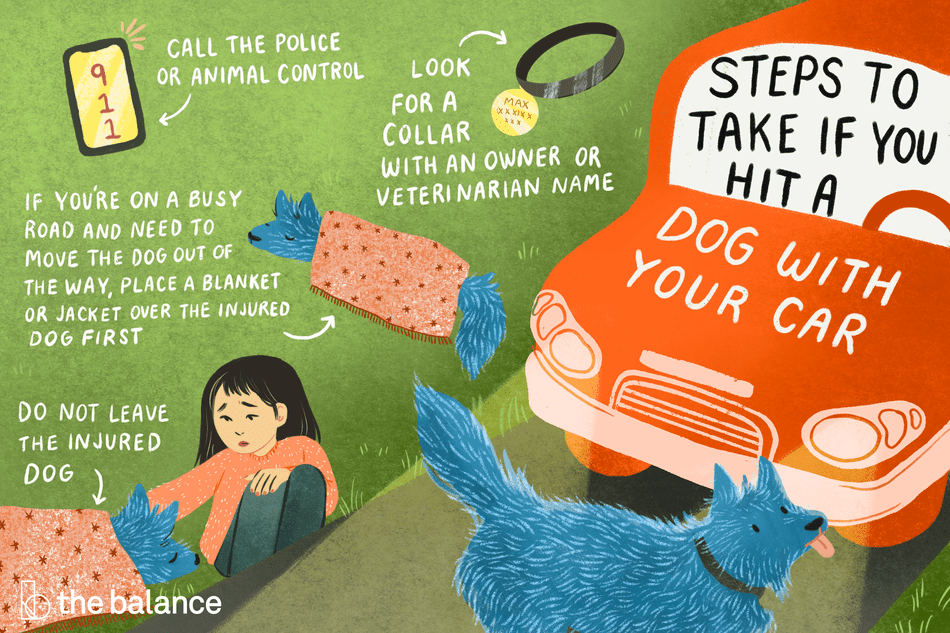 Steps to Take if You've Hit a Dog With Your Car: Call the police or animal control Look for a collar with an owner or veterinarian name If you're on a busy road and need to move the dog out of the way, place a blanket or a jacket over the injured dog first Do not leave the injured dog
