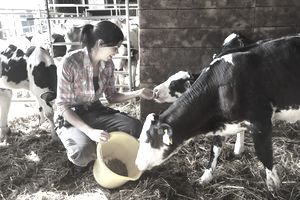 Woman on a farm feeding calves