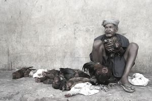 Indonesian Man Selling Dead Chickens on the Street
