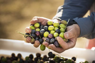 Holding harvest of grapes representing capital gains and losses.