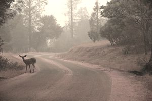 Deer on the road in the early morning.