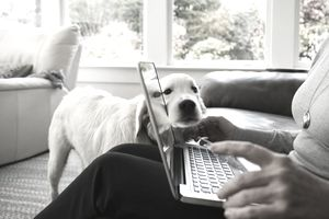 A woman compares mortgage loan offers on her laptop while her dog watches on.