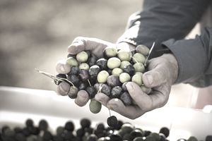 Man holding harvest of grapes representing capital gains and losses.