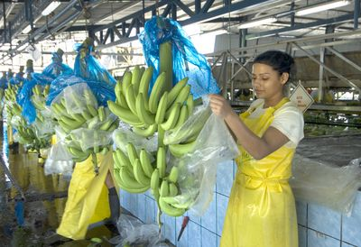 Woman working in banana packaging plant