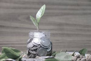 Coin in the bottle and plant growing with savings money put on the wood.