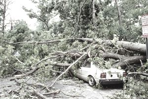 Fallen tree laying on top of a car will lead to an insurance claim