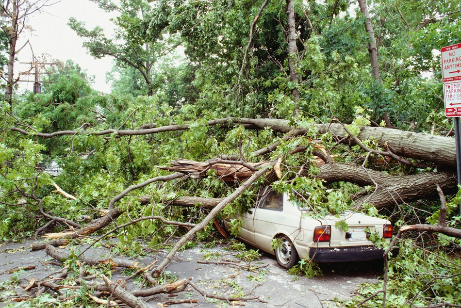 Fallen tree on a car, Washington DC, USA