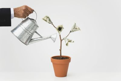 Businessman watering potted money tree