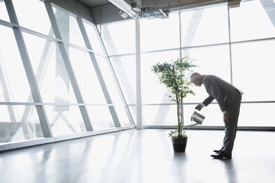 business man watering a tree, growth