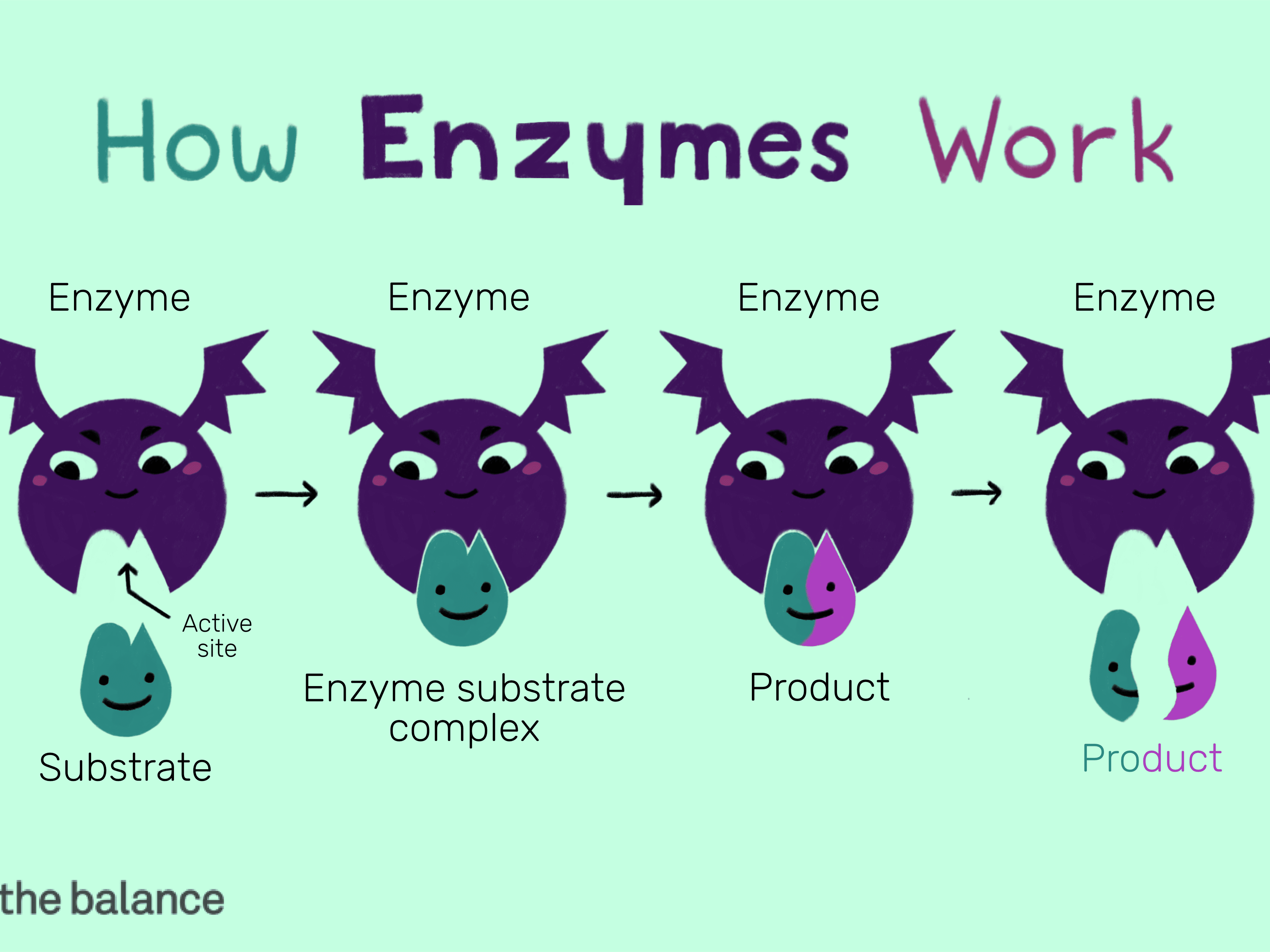 Structure and Function of an Enzyme