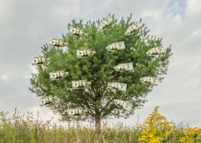 Dollar bills growing on a tree symbollizing principal money that grows when untouched