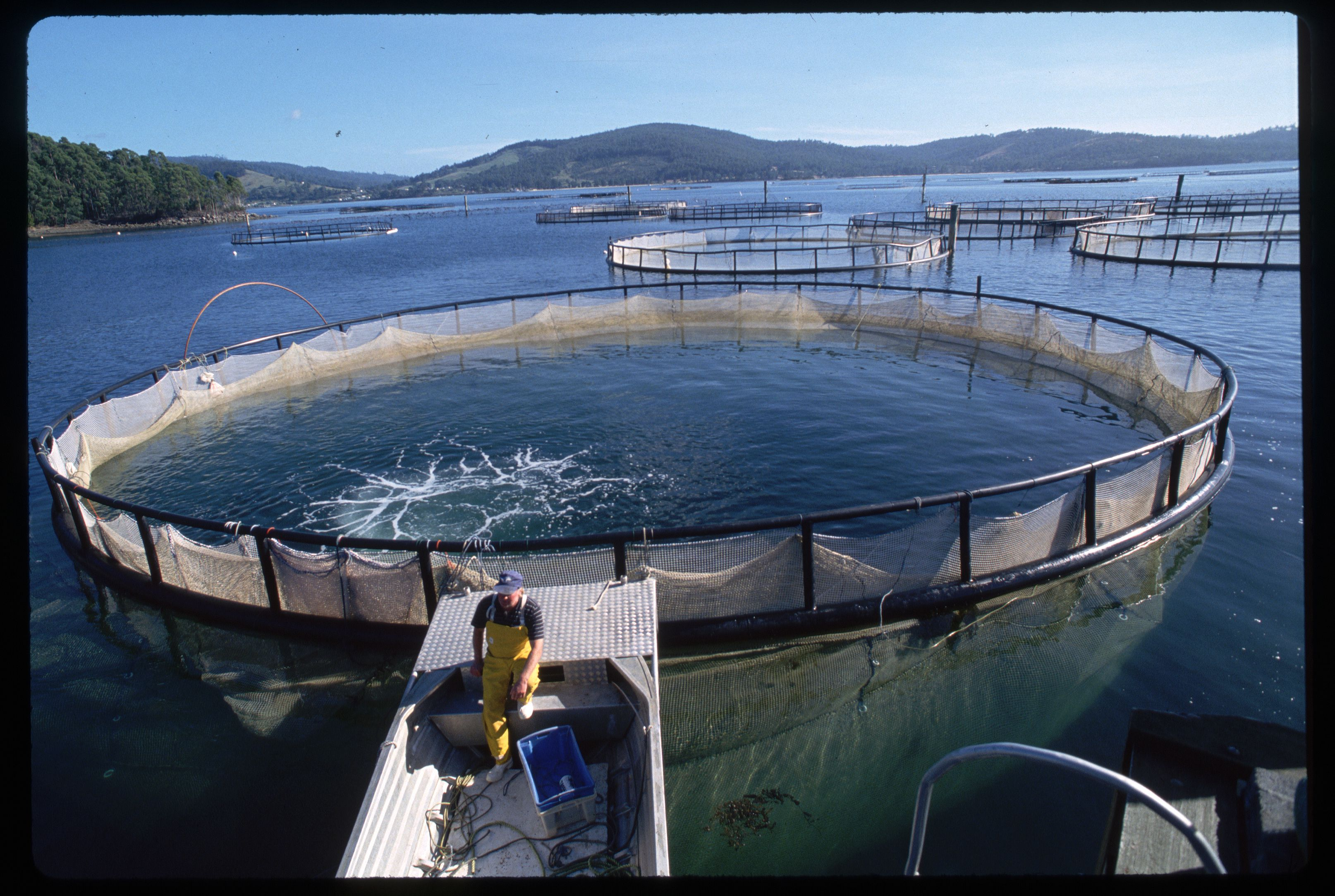 The Rise in Aquaculture