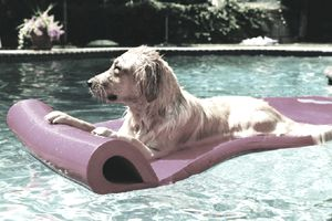 Dog floating in a pool on a pink float