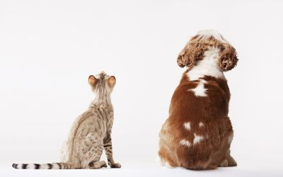 The 6 Best Pet Insurance Options of 2019