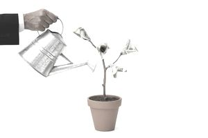 Businessman watering potted money tree, cropped